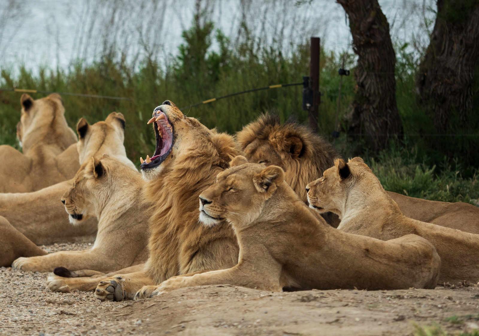 Sigean réserve africaine Mai 2019